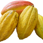 cacao-blanco.png
